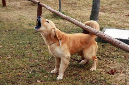 Neighbor Lying About Dog Barking